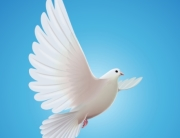 fine-art-of-deescalation-peace-dove